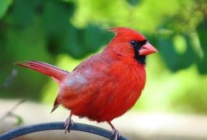 05-05 Cardinal Roper